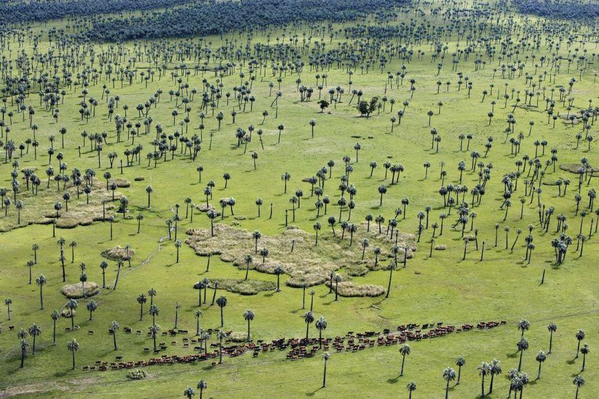 Palm grove, Rocha Department, Uruguay