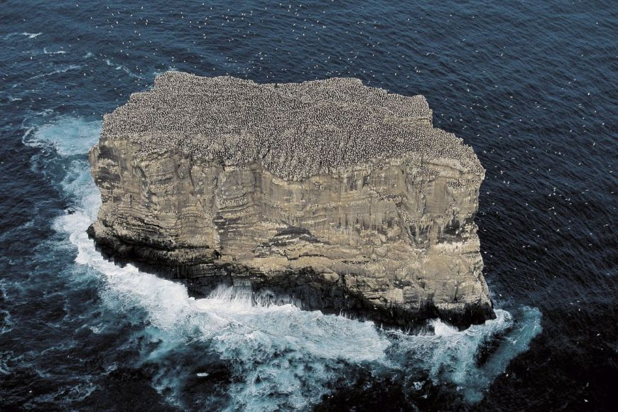 Gannet colony, Iceland