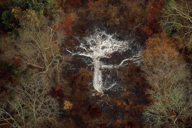 Cendres d'un arbre, Côte-d'Ivoire