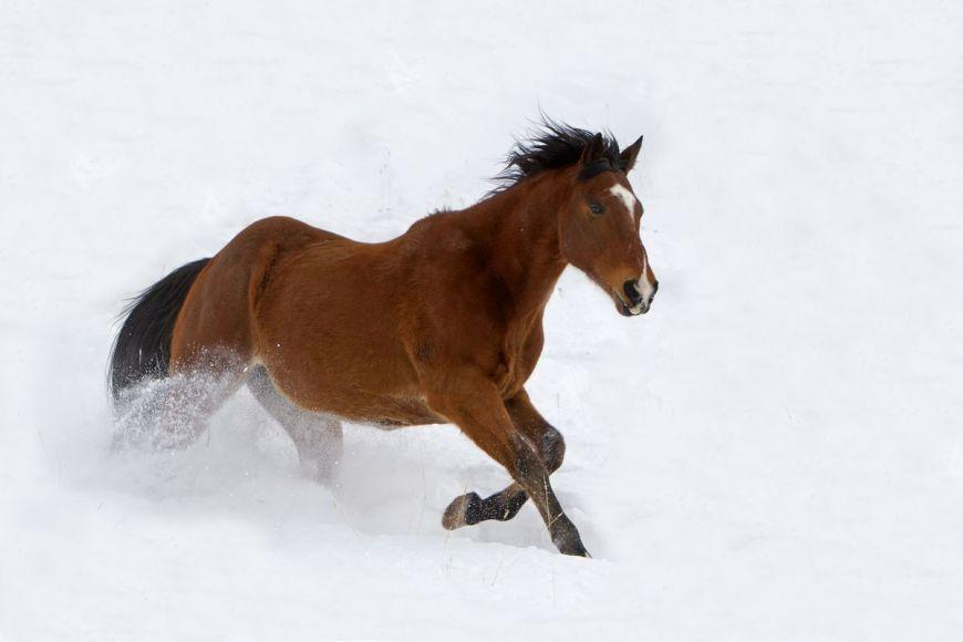 Cheval, Wyoming, Etats Unis