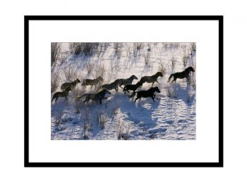 Russia, Siberia, Buryat horses in the wild