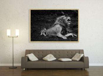 Le Lion de Yann
