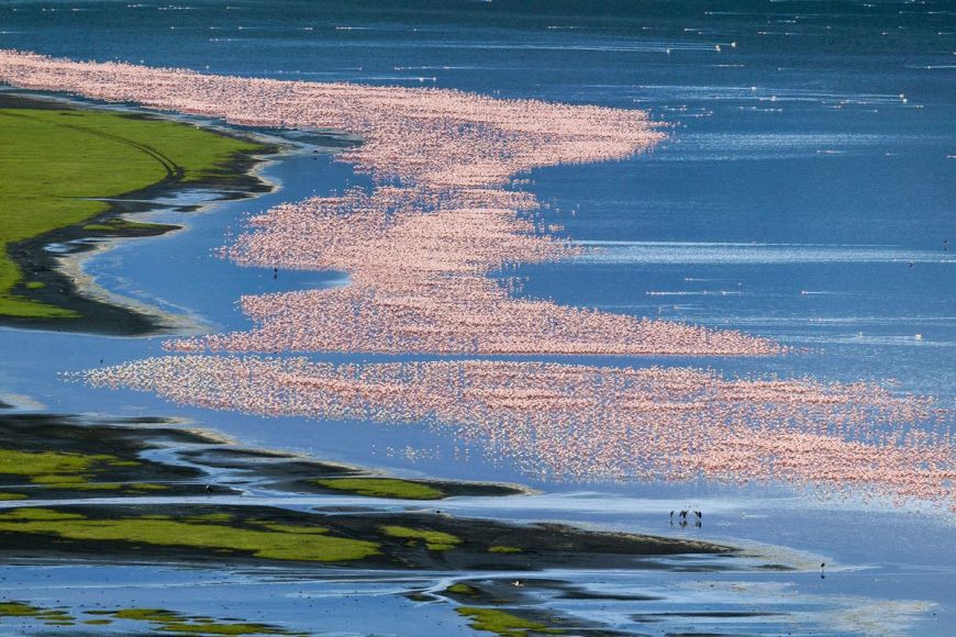 Kenya, aerial view of flamingoes, Lake Nakuru