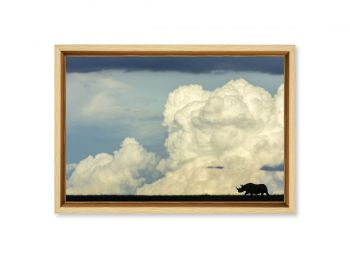 Kenya, rhinocéros noir
