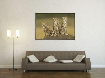 Kenya, cubs in the Masai-Mara