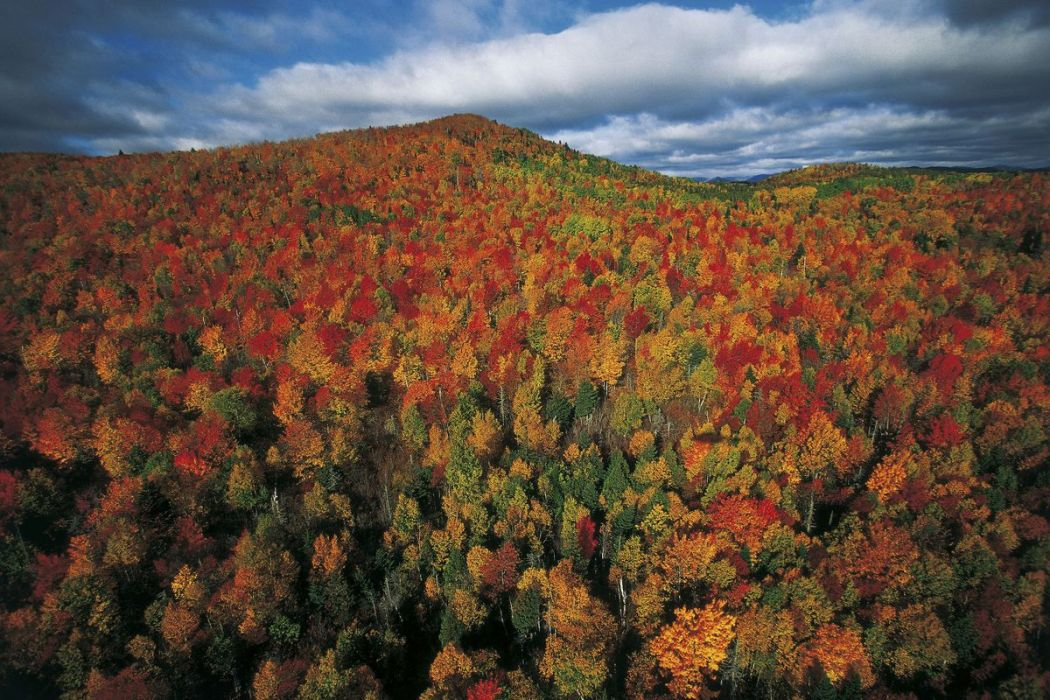Autumn forest, Quebec