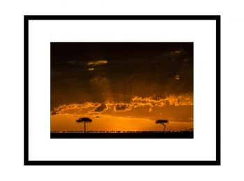 Kenya, gnous au coucher de soleil