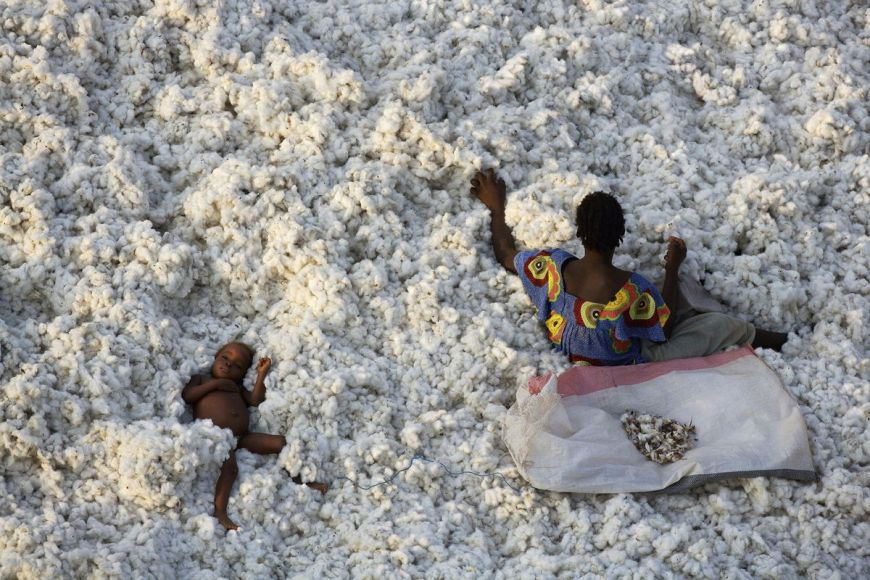 Cotton harvesting, Burkina Faso