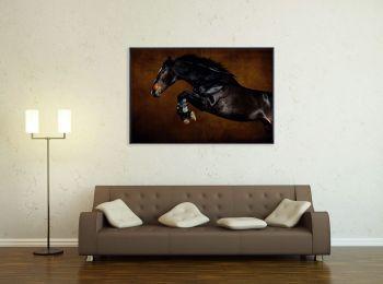Selle Français stallion