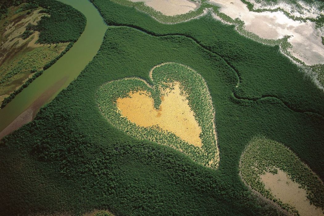 Mangrove of the Heart of Voh, New Caledonia