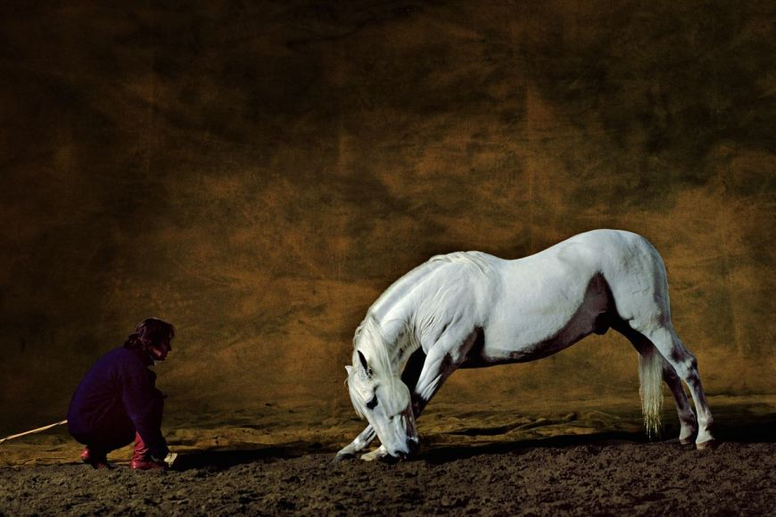 Andalusian horse by Mario Luraschi