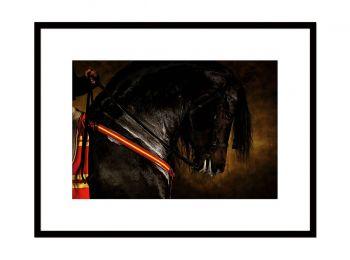 Etalon Pure Race Espagnole Tejedor VII