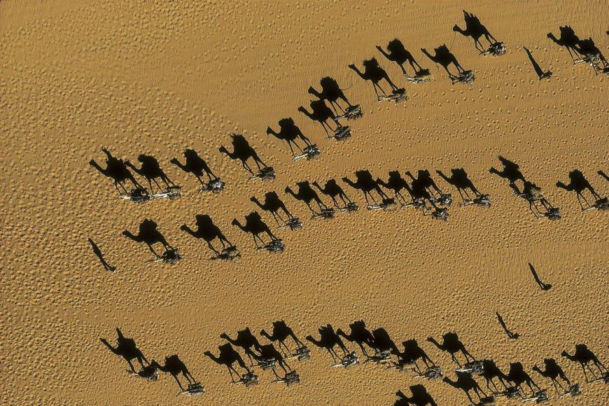 Caravanes de dromadaires, Niger