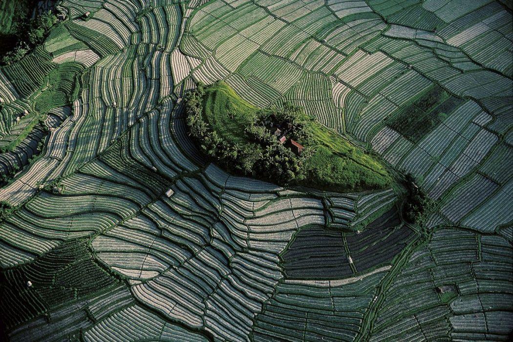 Rizières en terrasses de Bali, Indonésie