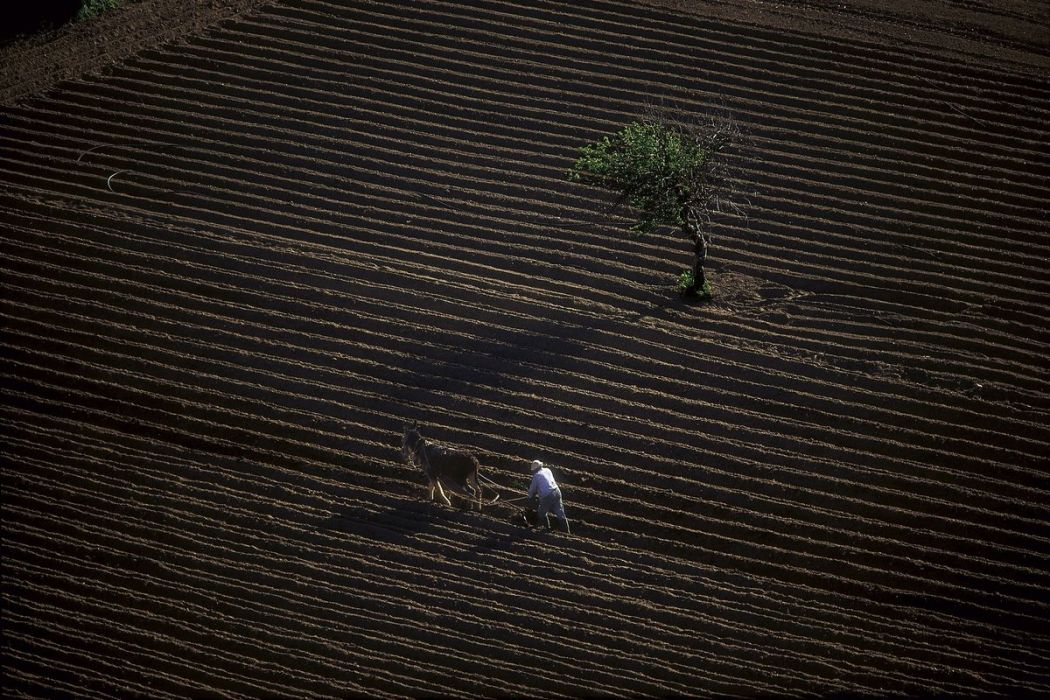 Farmer ploughing his field in Crete
